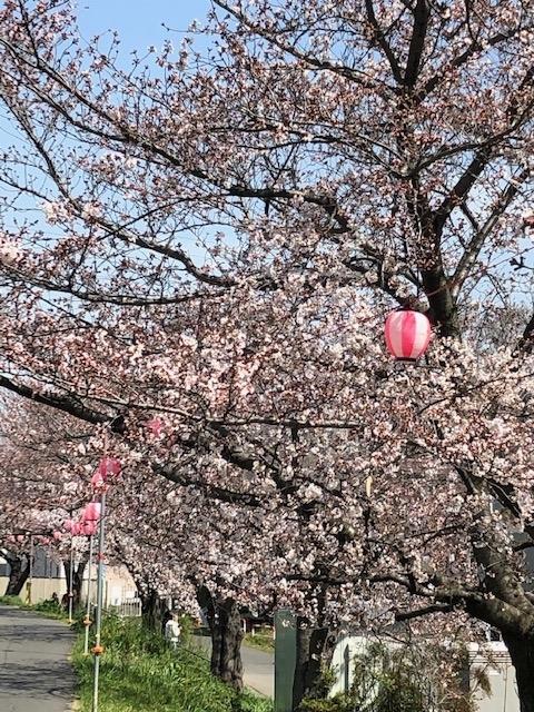 2020年の桜1